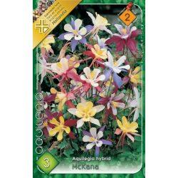 Virághagyma Aquillegia McKana mixed