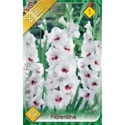 Virághagyma Fiorentina 10 db-os