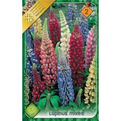 Virághagyma Lupinus hybrid mixed