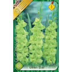 Virághagyma Gladyolus Green Star