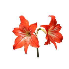 Virághagyma